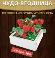 Как посадить домашнюю ягодицу клубнику видео