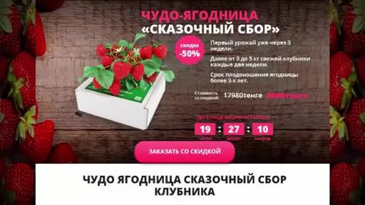 Сколько стоит домашняя ягодница клубники