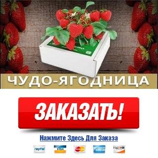 Чудо ягодница Сказочный Сбор купить в спб