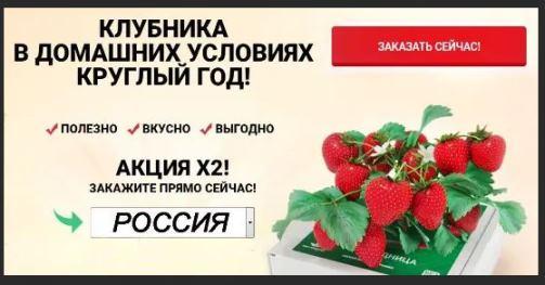 Как заказать Сколько стоит домашняя ягодница клубники