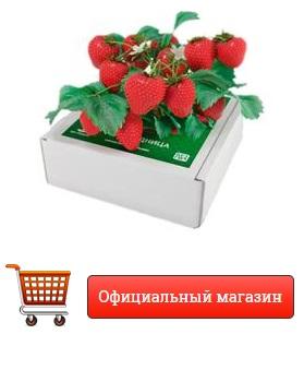 Как заказать Чудо ягодница Сказочный Сбор купить в спб