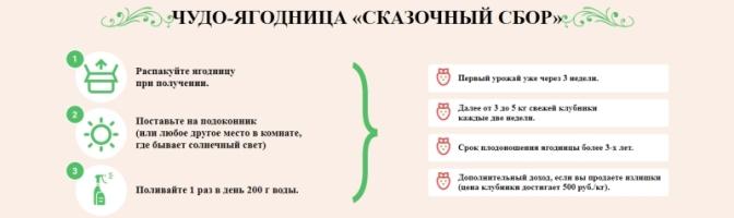 Как заказать Семена клубники Сказочный Сбор