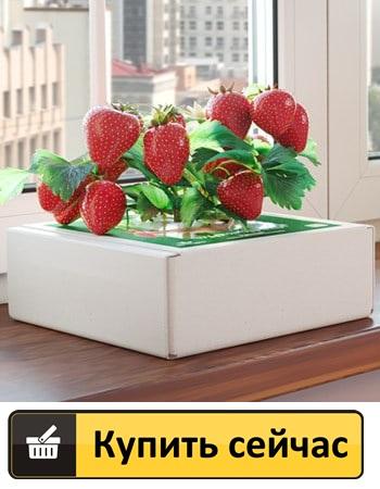 Как заказать Широкие ягодицы домашнее